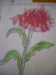 crisantemo 002