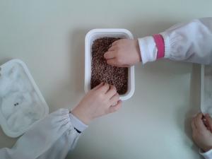 la semina (3)