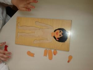 scopriamo il corpo umano (13)