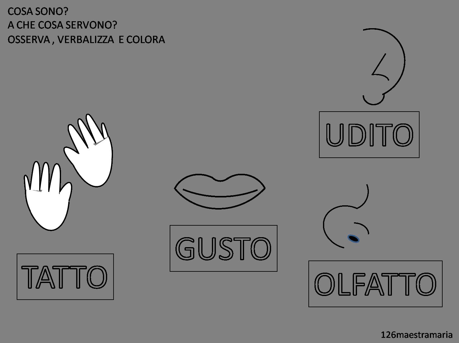 Conosciuto Schede sui cinque sensi da colorare | Maestramaria FI09