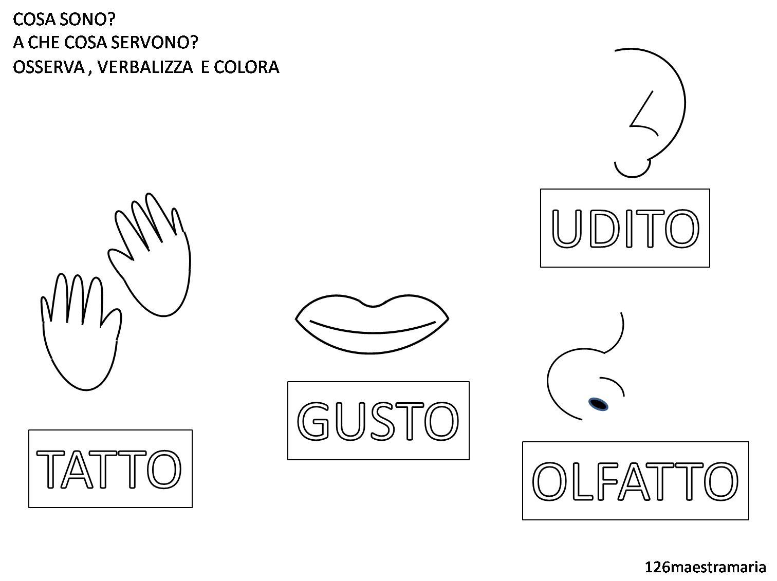 Ben noto Schede sui cinque sensi da colorare | Maestramaria TB43