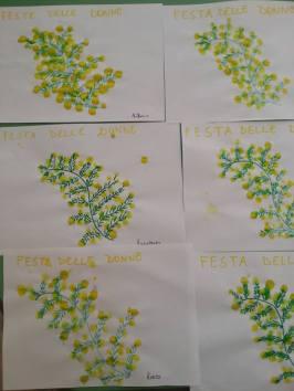 mimosa digito